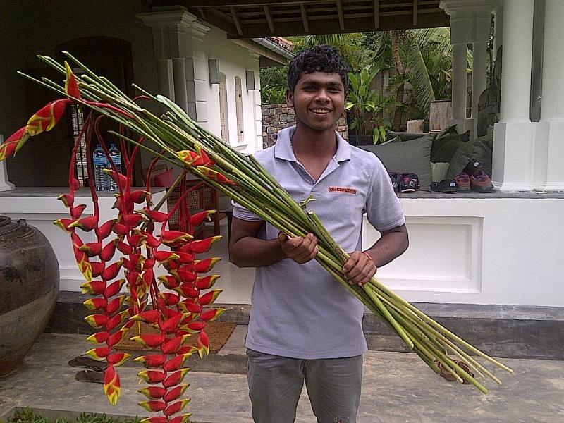 Frische Blumen aus dem Garten für das Haus.