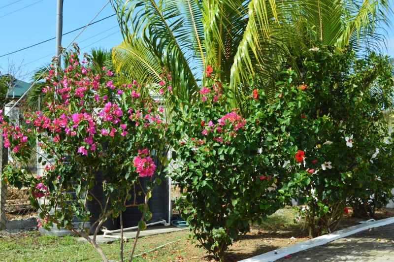 Tropical beauty