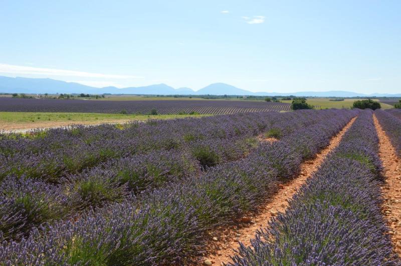 Plateau de Valensole - Route des lavandes