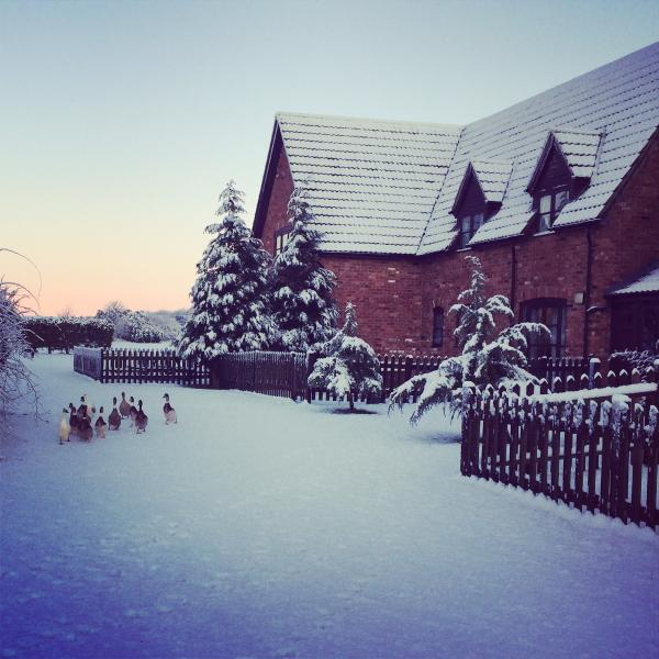 Ducks in the snow!
