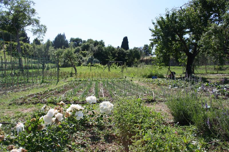 Our vegetable garden 400 metres away from the apt