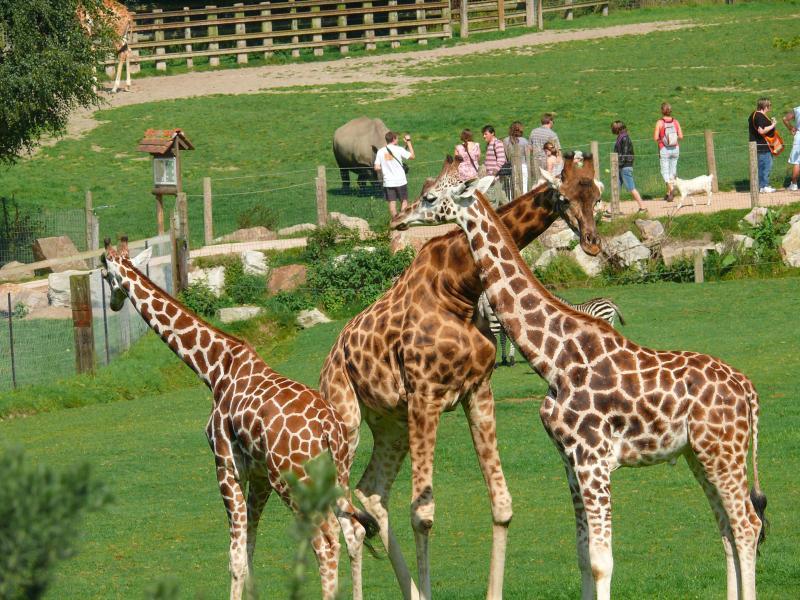 Le Zoo de CERZA , des animaux en liberté,une vraie découverte à 25 kms du gite, un bonheur pour tous