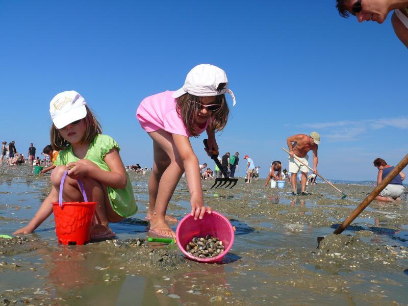 L'été en normandie c'est cela, plage, baignade, chateau de sable, sans oublier  la gastronomie