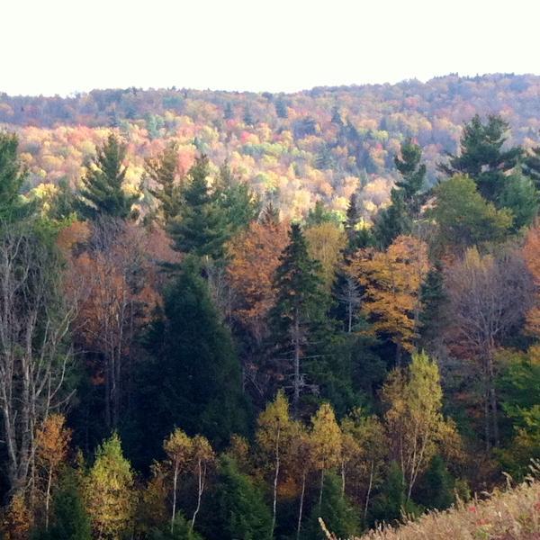 Respirer en couleurs d'automne