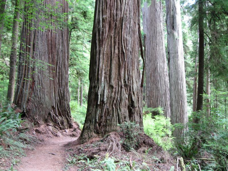 A hike on The Boy Scout Tree Trail