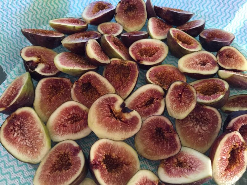 Higos orgánicos crecen en la higuera en el jardín trasero