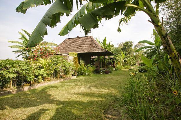 Giardino nei dintorni di Bungalow 1