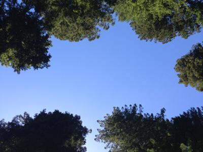 Aberly Grove, Beautiful Surroundings
