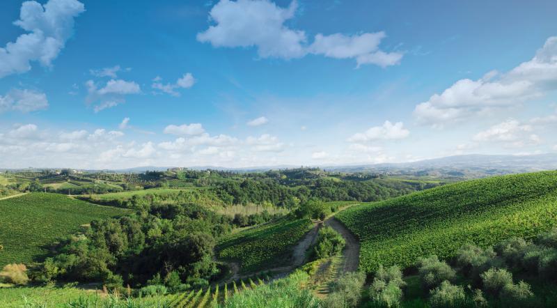 Casa Lorenzo - Tuscany cook, holiday rental in Badia a Cerreto