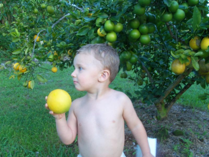 my grandson eating an orange from one of our many fruit trees/