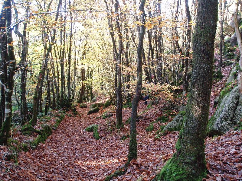 Beautiful woodland walking in our back yard and many other places nearby