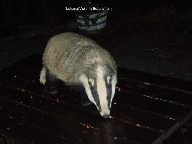 One of our Nocturnal Visitors