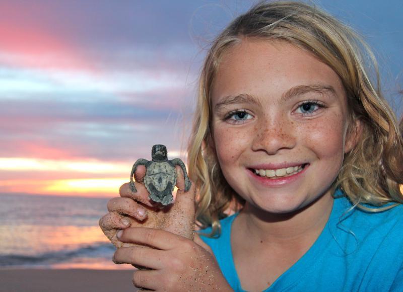 Comunicados de tortuga son menos de una milla de distancia.