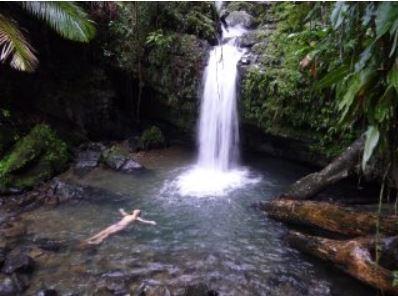 Yunque Rain Forrest