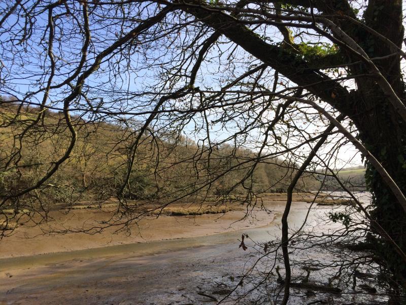Walk along the estuary near Aveton Gifford