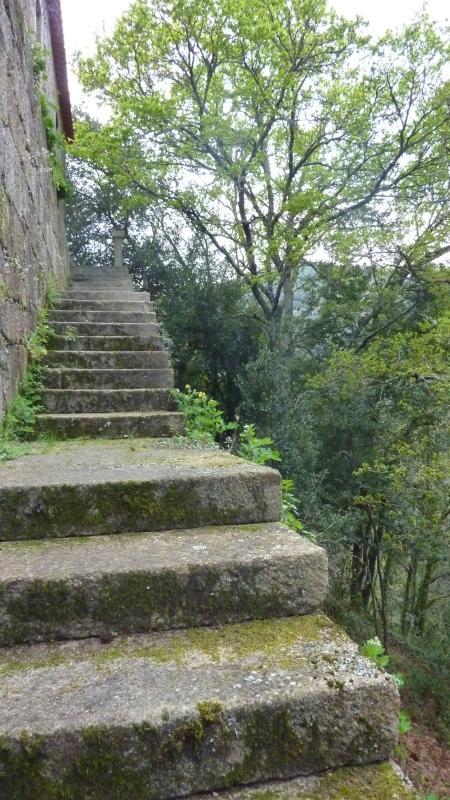 Ancient stairs to the wood