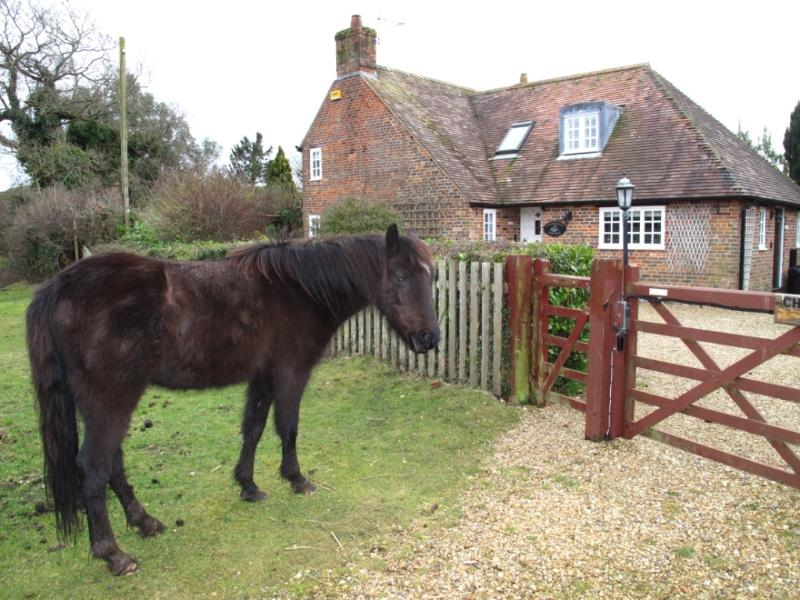 Chamberlains Cottage Front and pony