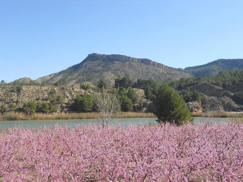 Primavera, árvores de fruto em flor