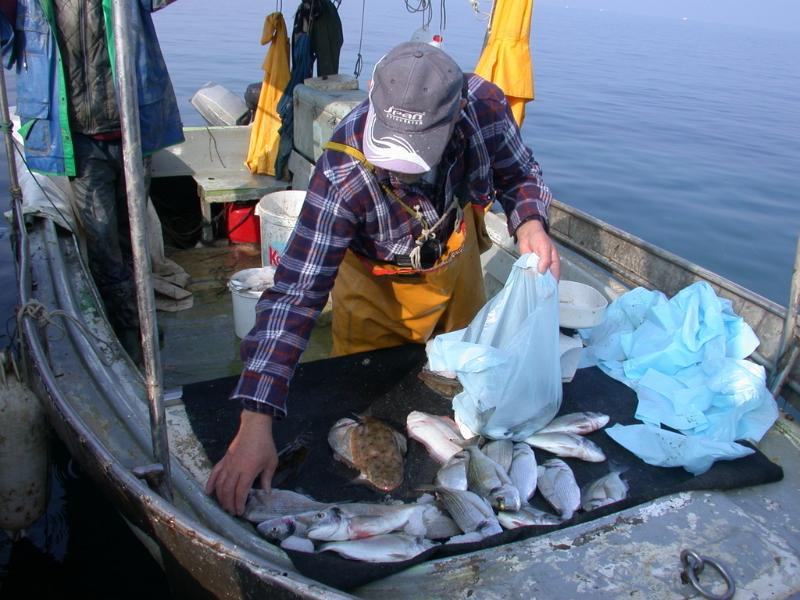 You can buy fresh fishes directly from the fishermens