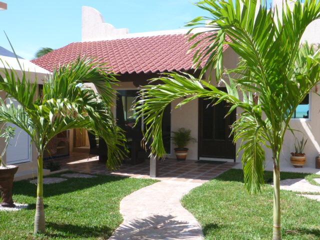 Tropical palms in garden