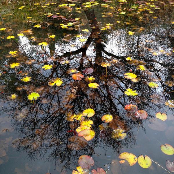 big pond in december
