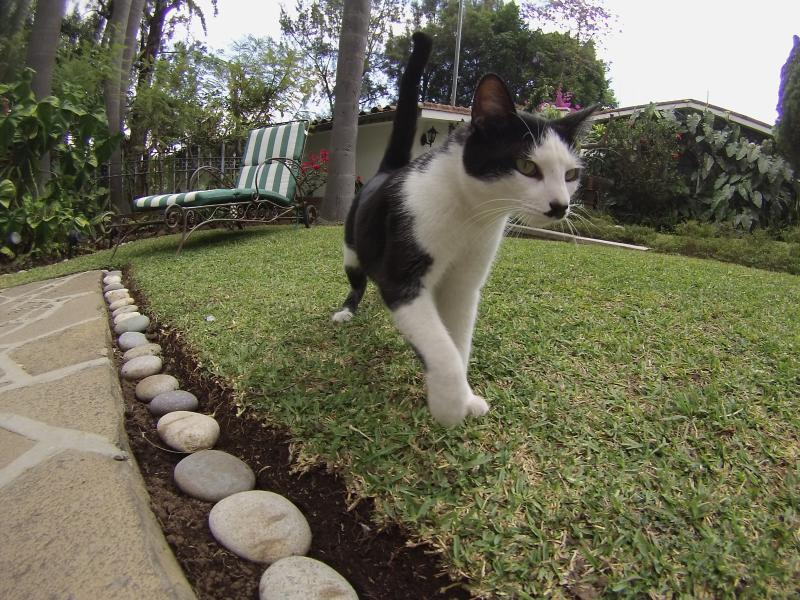 ¡Mascotas Bienvenidas!/Pets Welcomed! #petfriendly