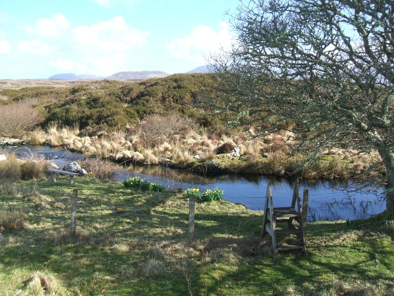 Stile and Oak tree with daffodils in flower March 2015