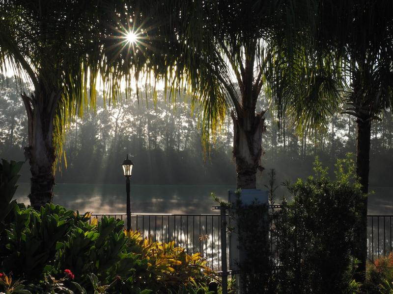 Serene morning view in the gardens of Paradise Palms resort.