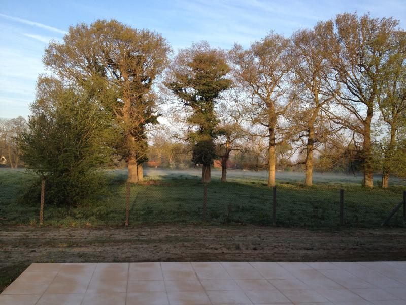 Garden at dawn with rising mist in the oak trees.