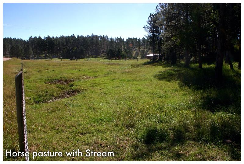 Horse pasture with small creek.