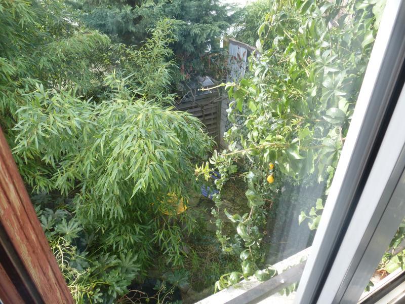 The rear garden.