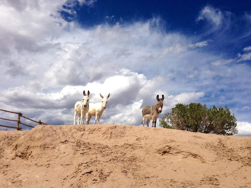 Casita de Chuparosa, Abiquiu, Hot Tub, Horses, Mini Donkeys, Alpacas., holiday rental in Espanola