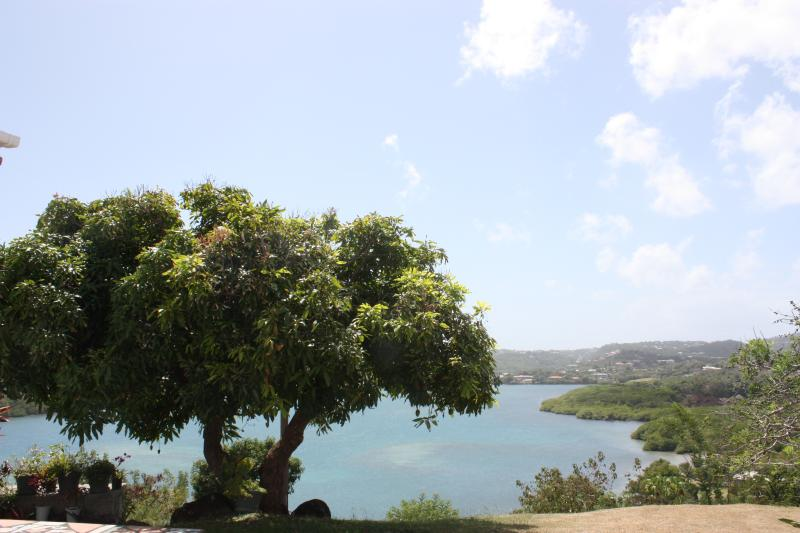 Baywatch mango tree with views over Westerhall Bay