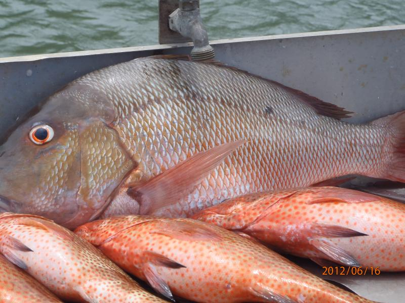Catch of the day!  Fish your own or eat fresh at one of the famous Seafood Restaurants in the area.