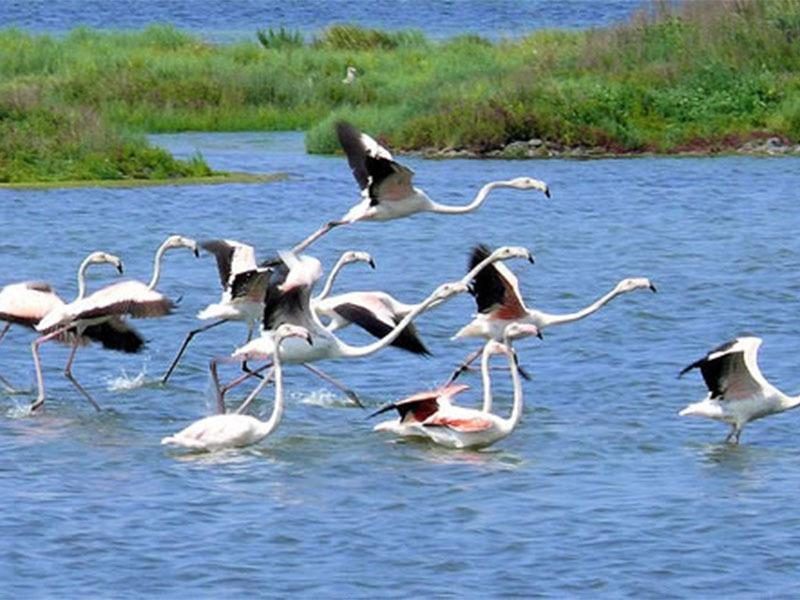 Birdwatching in valle di comacchio