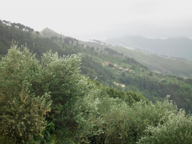 View of surrounding hills.