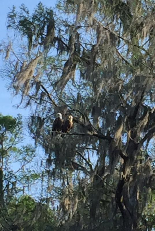 Mr. and Mrs. Eagle upriver near Poe Springs