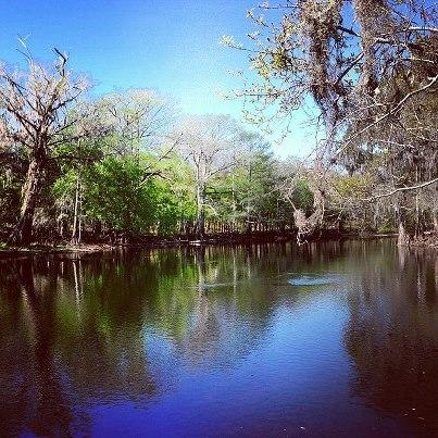 Abajo vista del río hacia la isla de Ron, Ginny y Blue Springs