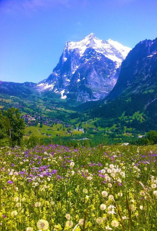 Alpine meadow, on a hike up to Kleine Scheidegg, looking back to Grindelwald