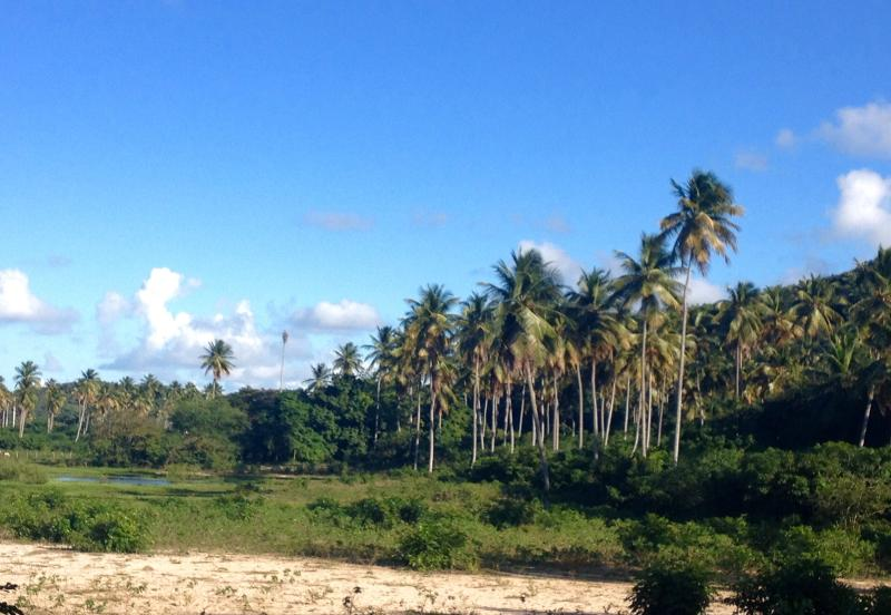 Our kind of Coconut Palms Forest