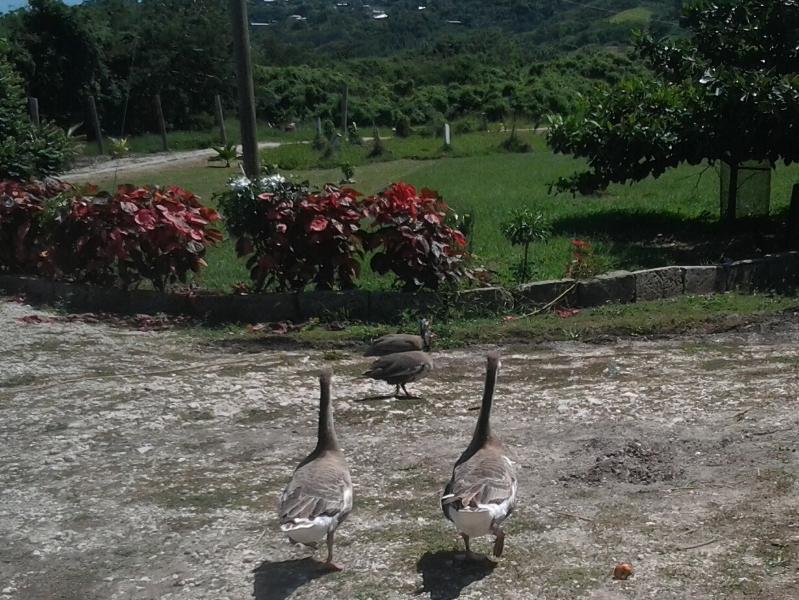 Our farmyard friends
