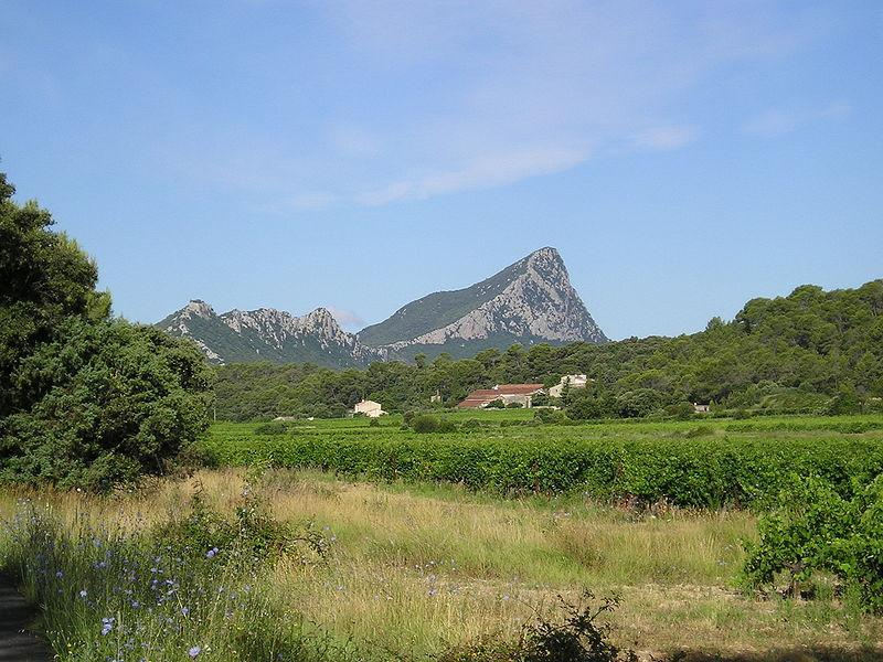 Vignes, garrigue, pinèdes de l'arrière pays  Hinterland