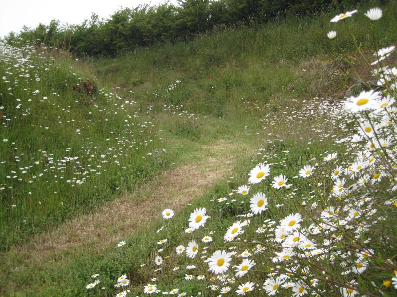 Ham Farm in April May and June is full of wild flowers, joyful birds, spring lambs. Just glorious!
