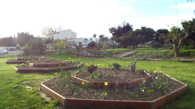 The new gardens starting to come to life.