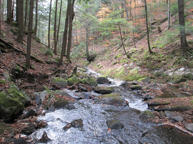 Turkey Mt. Brook (a trout stream)