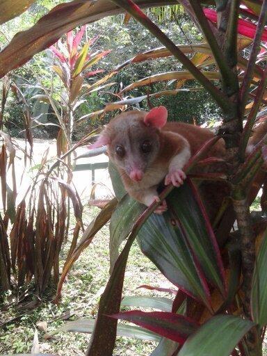 rare animal sighting on property