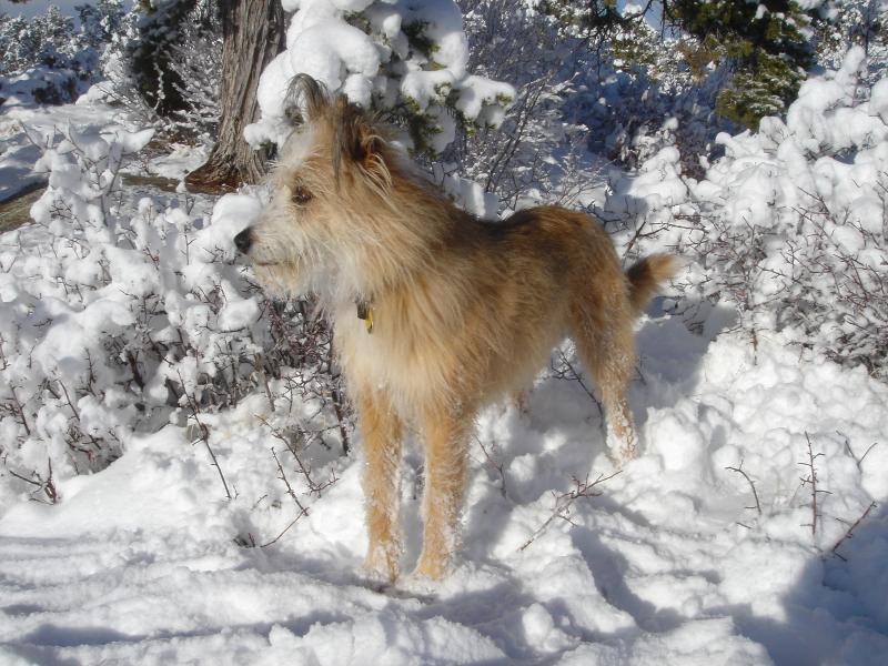 Mon garçon spikey aime les hivers