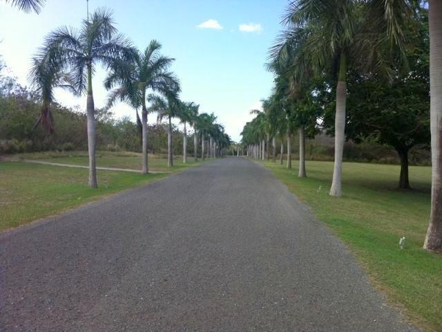 Nearly half mile long royal palm allee, entrance to Gentle Winds