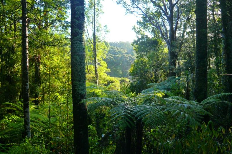 Nestled in a Kauri Reserve