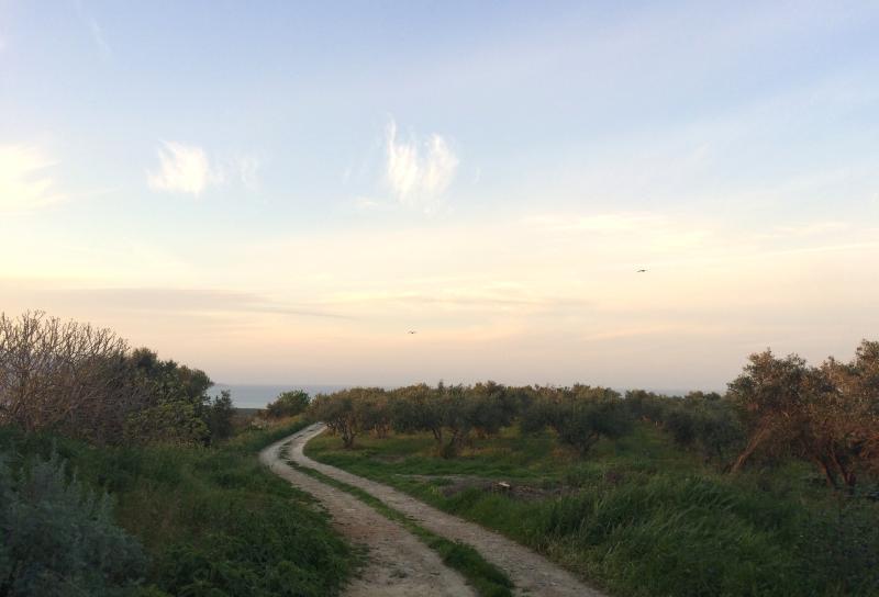 Les environs Mill; idéal pour que jogging matinal!